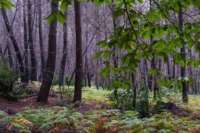 Entorno natural de la Sierra de Gata