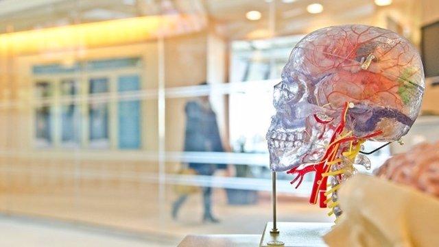 Un nuevo método para medir la atrofia de la médula espinal se incorpora a un ensayo clínico sobre la esclerosis múltiple