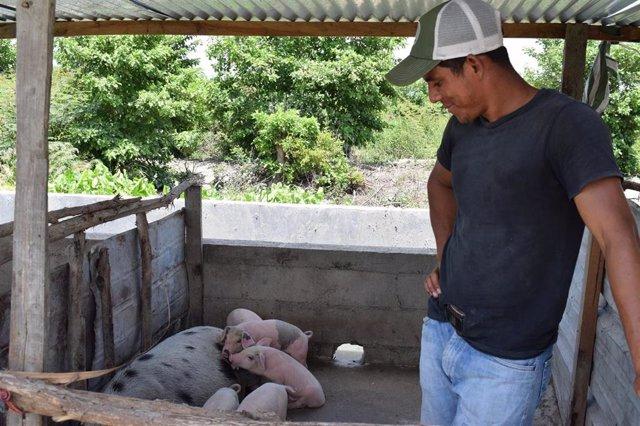 Naim recibió ayuda de la OIM para la cría de cerdos