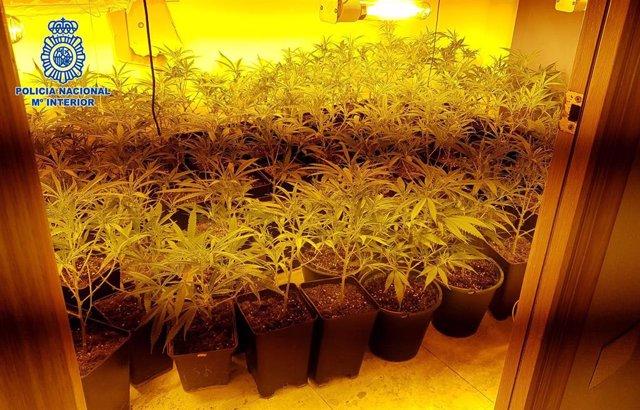 Marihuana en una vivienda de Almería