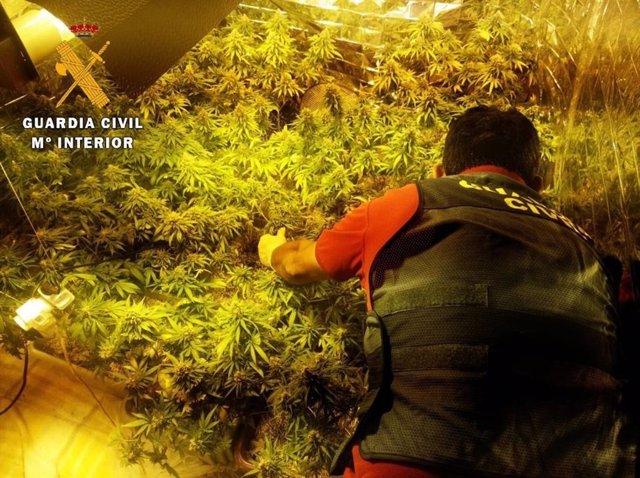 Cultivo de marihuana localizado en una vivienda de Roquetas de Mar (Almería)