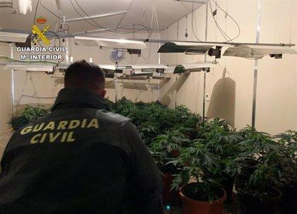 Guardia Civil desmantela dos naves acondicionadas para el cultivo de marihuana y detiene a un individuo