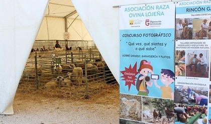 La Junta convoca ayudas a la organización de certámenes agroganaderos para activar zonas rurales