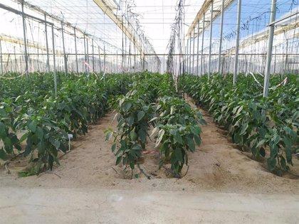 """Cooperativas Agro-alimentarias avisan de que el """"agotamiento"""" del modelo afecta al sector hortofrutícola andaluz"""
