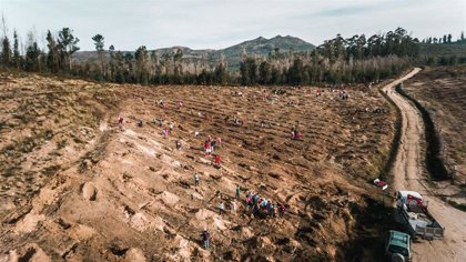 Unas 100.000 personas plantarán 90.000 árboles de variedades autóctonas en cinco CCAA