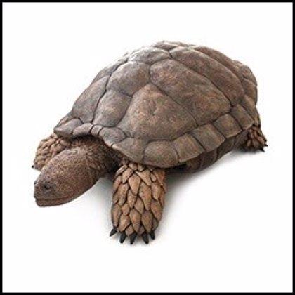 Científicos españoles identifican una nueva tortuga primitiva del Cretácico de España