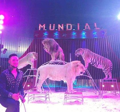El Gran Circo Quirós vuelve a Madrid con su espectáculo con animales a partir de este viernes