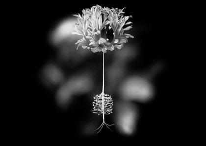 La obra 'Sola' de Consolación Padrón gana el concurso de fotografía 'Apúntate al JAO'