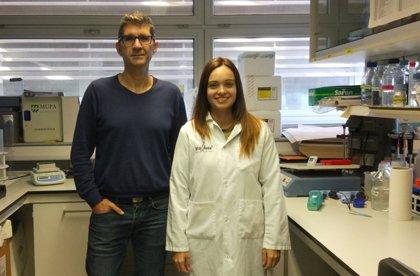 Descubierta una relación genética entre la función cardiovascular y el desarrollo del Alzheimer