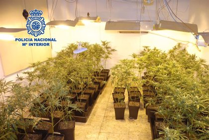 La Policía detiene a un matrimonio en Alcázar de San Juan tras desmantelar una plantación de marihuana