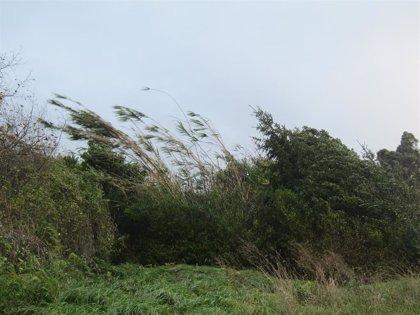 Avisos amarillos este domingo por oleaje en Granada y Almería, donde también se registran por rachas de viento
