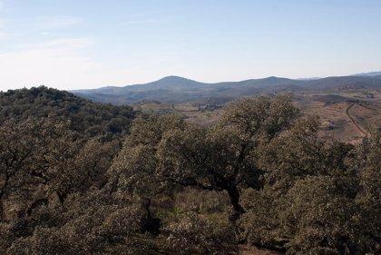 La Junta prepara un banco de proyectos de licitación pública forestal cifrado en 60 millones de euros