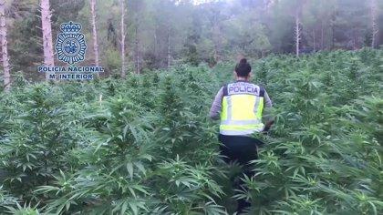 La Policía Nacional desmantela la mayor plantación de marihuana localizada hasta la fecha en Aragón