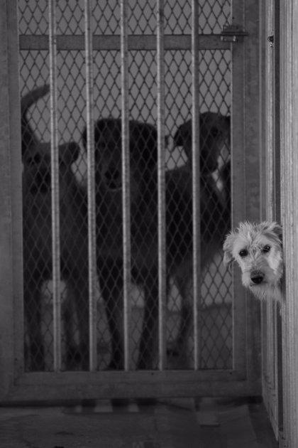 La protectora Motivo 113 Animales organiza en Valladolid una charla sobre acciones legales en casos de maltrato