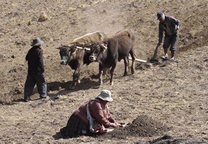 Bolivia.- Campesinos bolivianos de los Yungas anuncian una marcha masiva para este lunes