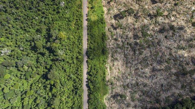 Tierra deroestada en Amazonia