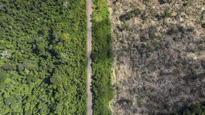 Un estudio culpa a la deforestación de la ola de fuegos en el Amazonas