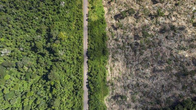 VÍDEO: Un estudio culpa a la deforestación de la ola de fuegos en el Amazonas