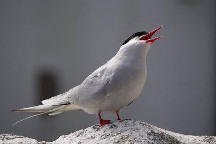 Las aves que migran a mayor distancia acusan el cambio climático