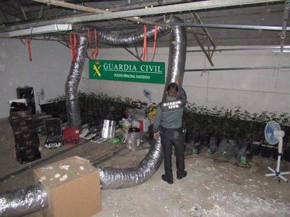 Investigados cuatro jóvenes por una plantación de marihuana en una nave alquilada en Poio