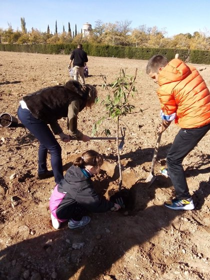 Comienza la plantación de 600 árboles y arbustos en un solar vacío de Valdespartera