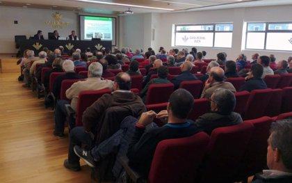 Un centenar de cooperativas aclaran en Jaén dudas sobre la licitación del almacenamiento privado de aceite de oliva