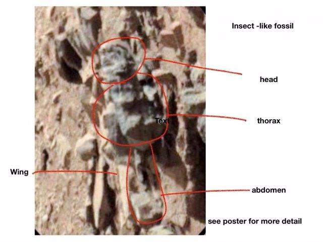Forma documentada como insecto fósil en la superficie de Marte