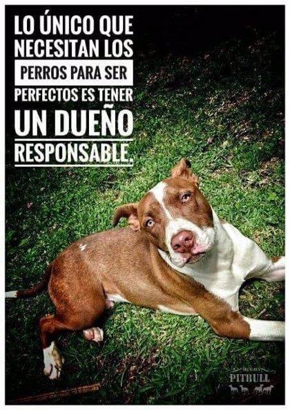 Policía denuncia al dueño de un perro potencialmente peligroso y reincidente por llevarlo suelto y sin bozal