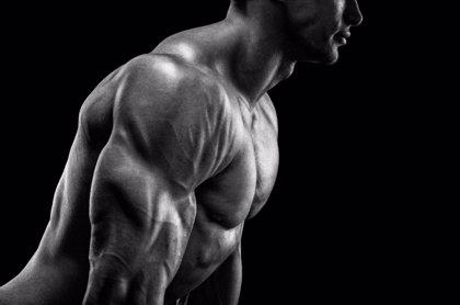 ¿Cómo se alimentan los músculos?