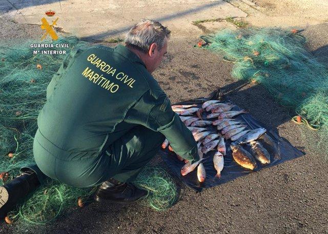 Sorprenden a un pescador furtivo con cachones y salmonetes en un barco en la bah