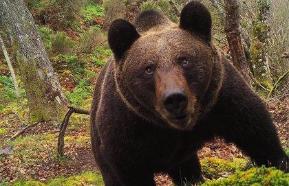 FAPAS, el Instituto Jane Goodall y Gutiérrez Acha, Premios a la Conservación de la Biodiversidad de Fundación BBVA