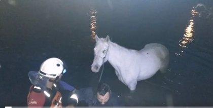 Bomberos de Bizkaia rescatan a una yegua que había caído al río Cadagua en Güeñes