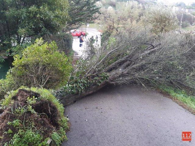 Árbol caído de unos 10 metros en la subida al cementerio de Comillas, que cortaba el paso de vehículos y personas.