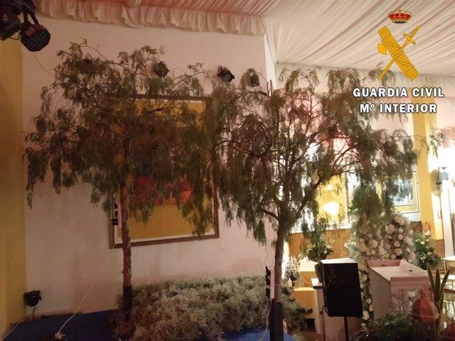 Árboles cortados en Benahadux para decorar un salón de bodas