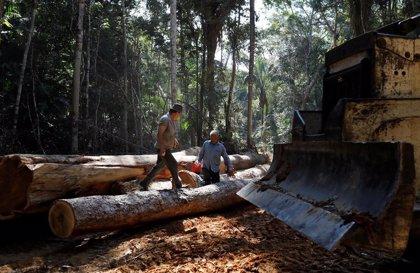 Brasil.- Amnistía alerta del saqueo ilegal de las tierras indígenas en Brasil para convertirlas en zonas de pasto