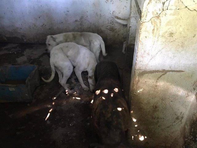 Imagen de dos de los perros facilitada por la Guardia Civil