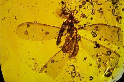 Artrópodos del Mioceno usaron termitas aladas para hacer 'autostop'