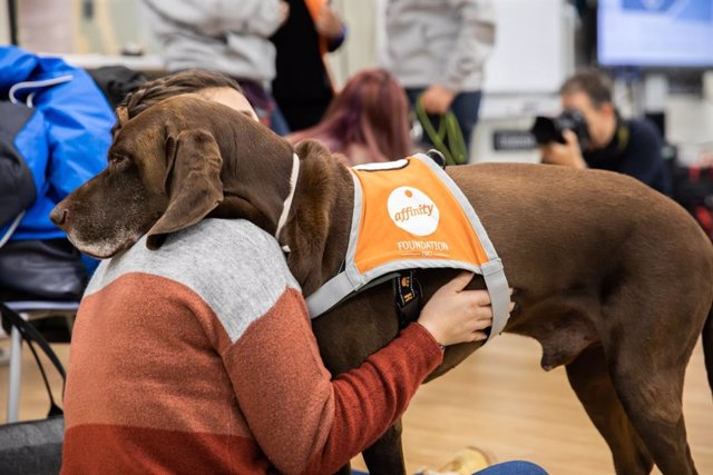 Uno de los perros participantes en la terapia de 'Compludog', junto a una alumna.