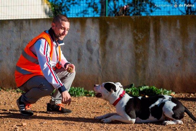 Un perro de Son Reus en adopción