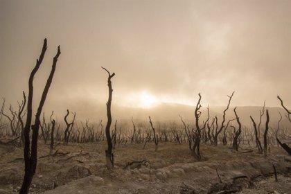 Alerta científica: nueve puntos de inflexión climática ahora 'activos'