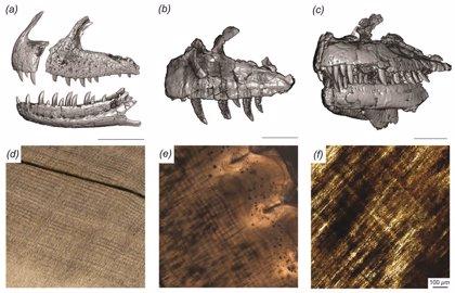 A un dinosaurio carnívoro le crecían dientes cada dos meses