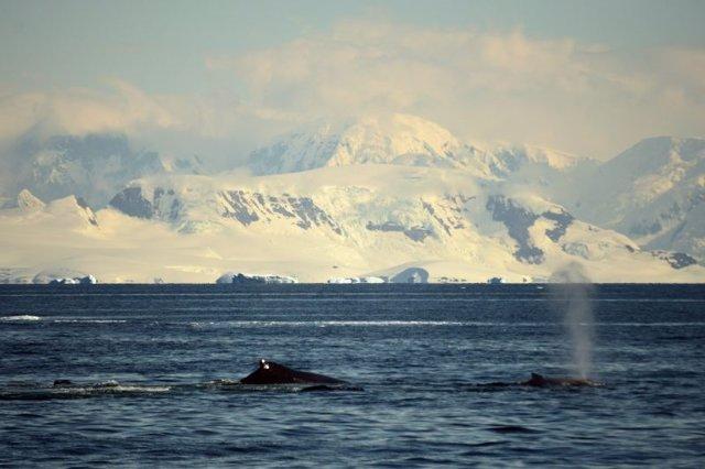 Investigadores de Almería y Granada desarrollan un método con inteligencia artificial para la conservación de ballenas