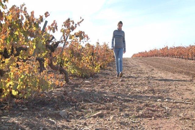 Campo extremeño afectado por la sequía