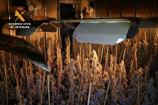 La Guardia Civil ha desmantelado en Logroño un gran laboratorio de producción de marihuana a gran escala dirigido por ciudadanos asiáticos.