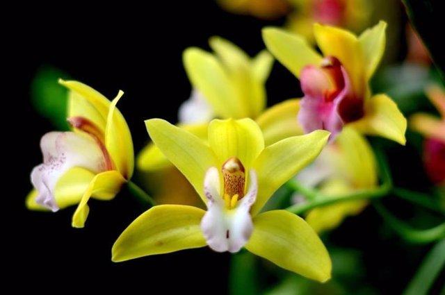 Orquídeas en el Real Jardín Botánico de Madrid
