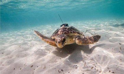 Especies marinas pueden ayudar en la investigación oceanográfica