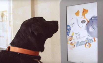 Ponte a la altura de los animales con Mascotas 2, ya en DVD, Blu-Ray, 3D y 4K UHD