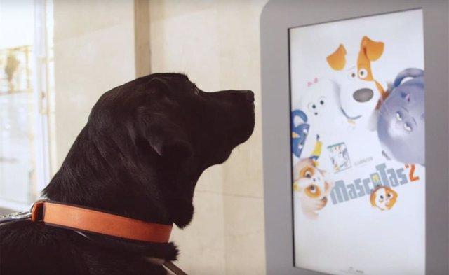 Campaña promocional de Mascotas 2