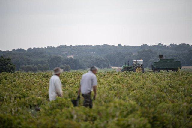 Trabajadores del campo durante la vendimia