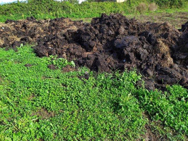 Residuos sólidos de ganadería, 'cuchu'.